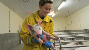 Learning how to handle a variety of animals included time with some pretty adorable piglets.