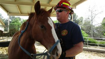 Spending time with horses and other large animals in a training setting helps to build the comfort level and confidence of our firefighters when working with them during an emergency.