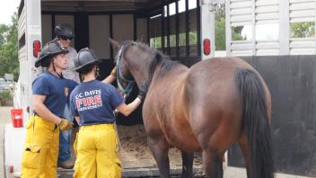 It's not uncommon in a disaster for humans not to evacuate because of their animals.  UC Davis Firefighters learned how to safely aid in getting horses into transport trailers.