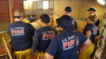 UC Davis Firefighters learn to safely interact with and move sheep.