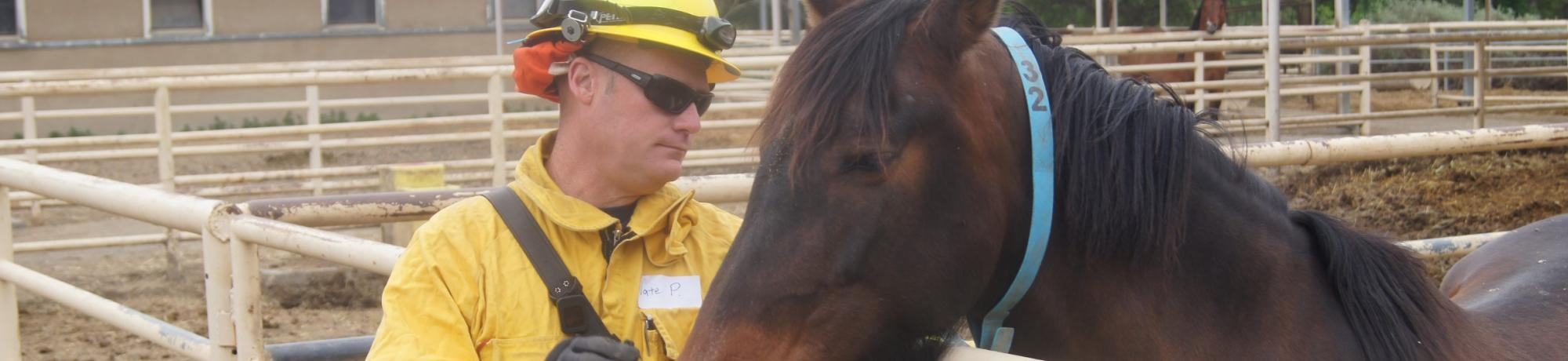 A UC Davis firefighter working to calm a horse.